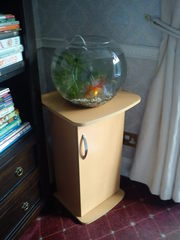Large Fish Bowl and fiter